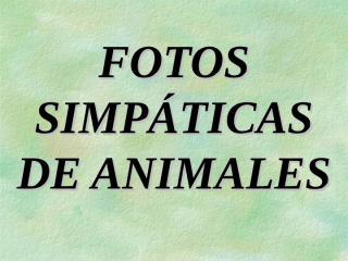 Animales-en-pareja.pps