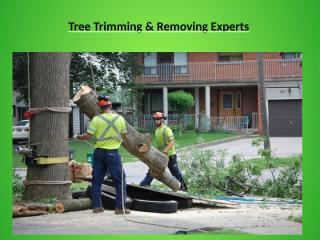 Tree Removal Fairfax VA.ppt